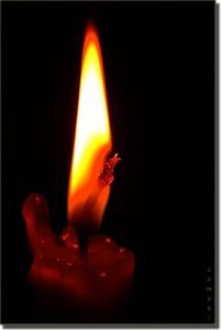 fiamma del nirvana
