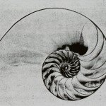 I numeri di Fibonacci nella Natura