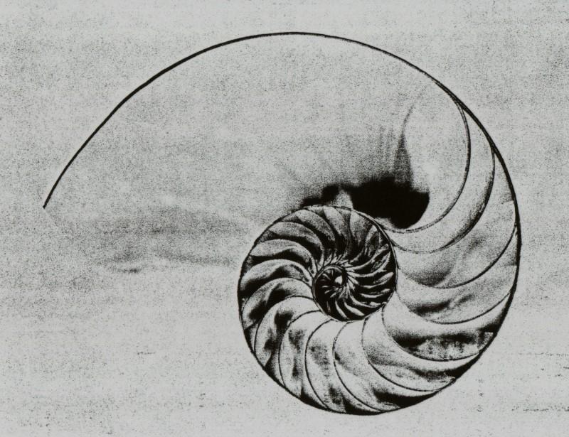 fibonacci numeri e natura